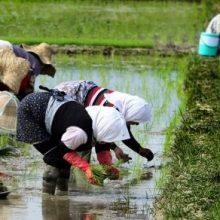 استقرار 600 نفر از مهندسان جهاد کشاورزی در روستاهای گیلان
