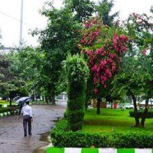 نم نم باران ، کاهش محسوس دما و خنکی هوا در گیلان