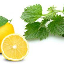 گزنه و لیموترش برای مقابله با کم خونی + روش تهیه