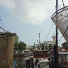مدیرکل شیلات استان امروز گفت : از اول اردیبهشت تا پایان خرداد بعلت تخم ریزی و تولید مثل کیلکا ، صید کیلکا ، در دریای خزر ممنوع است.