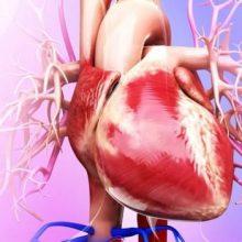 محققان هلندی در مجله اروپایی قلب : مطرح شده که ممکن است بتوان با واکسن جلوگیری از چربی خون در برابر افزایش کلسترول و عارضه تصلب شرائین مصونیت ایجاد کرد.