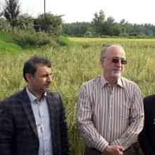 نجفی با اشاره به وجود ۲۳۸هزارهکتاراراضی شالیکاری ،ابراز کرد:به جد پیگیر موضوع تثبیت قیمت برنج با افزایش نسبی،فراهم نمودن نهادههای مناسب با سود کم میباشیم