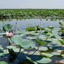 پدیدههایی همچون تصرفات غیرقانونی اراضی حاشیه تالاب که از طریق کاشت نهال انجام میشود، از مشکلات عمده زیست محیطی تالابخواری انزلیاست.