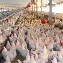 براساس ارزیابیهای سالانه و جلسات هفتگی و ماهانهای که در ستاد آنفلوآنزای مرغی فوق حاد پرندگان ملی و استانی سویه جدیدی از این بیماری به کشور وارد نشده