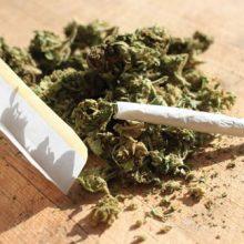 رئیس پلیس مبارزه با مواد مخدر تهران اظهار داشت:۲۰ تا ۲۵ درصد معتادان دستگیر شده در مناطق شمال شهر، مصرفکننده ماده مخدر «گُل» بودهاند.