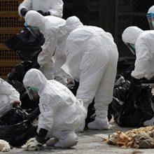 علی صفر ماکنعلی با اشاره به شناسایی ویروس جدید در بوجاق کیاشهر استان گیلان، اظهار کرد: بعد از ۱۲ سال برای نخستین بار ویروس H۵N۶ وارد ایران شده است