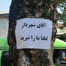 چه کسی پاسخگوست؟/ ارمغان یک دروغ برای شهروندان/ پروژه ای که برچیده شد و درختانی که قطع شدند/