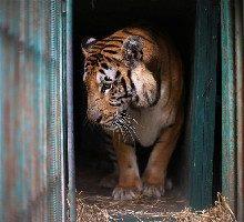 مدیرکل حفاظت محیط زیست استان آذربایجان غربی با تایید فرار برخی از حیوانات باغ وحش ارومیه پس از تندباد امروز، گفت: تمامی حیوانات وحشی درنده در باغ وحش تحت کنترل هستند و