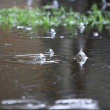 بارش باران که از دیروز در گیلان آغاز شد امروز شدیدتر شده است.