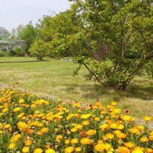 احیاء مرکز تولیدات گلهای فصلی به همت سازمان سیما، منظر و فضای سبز شهری شهرداری رشت