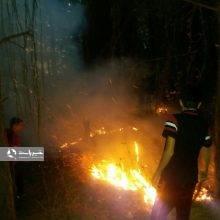 مهار آتش سوزی در جنگل های تالش