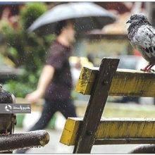 بارش های رگباری باران در گیلان