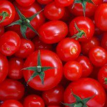قیمت گوجهفرنگی و رب گوجهفرنگی در بازار مصرف افزایش چند برابری دارد که به گفته رئیس اتحادیههای مویه و بنکداران مواد غذایی، علت این افزایش