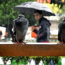 بیشترین بارش باران درغرب گیلان