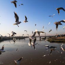 رئیس اداره حفاظت محیط زیست آستارا گفت: 2هزار پرنده پیش قراول مهاجر به تالاب استیل و پناهگاه حیات وحش لوندویل آستارا کوچ کردند. مهاجرت پرندگان پیش قراول