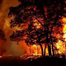 وزش باد گرم و هشدار آتش سوزی جنگلها