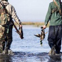 فصل شکار پرندگان از نیمه آبان در گیلان آغاز میشود