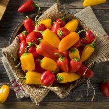 از فواید مصرف غذاهای تند چه میدانید؟