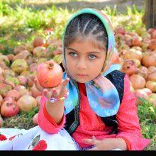 گزارش تصویری برداشت انار از باغات روستای انبوه رودبار گیلان